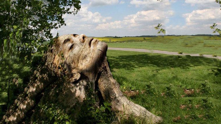 albero col volto di donna